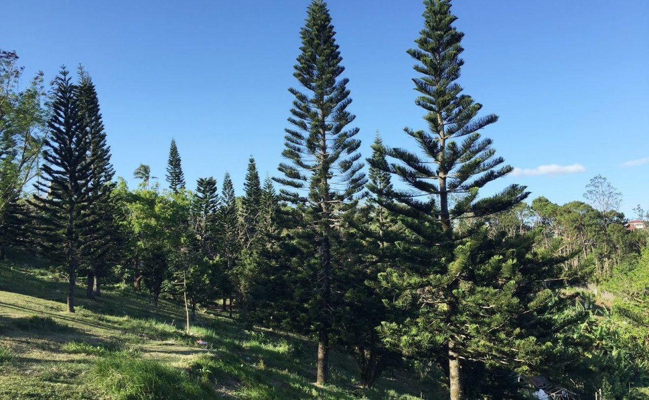 Tagaytay living - environment https://2.bp.blogspot.com/-V_QnBgVL06Y/VtCuwEbbh3I/AAAAAAAADSo/2jVqzPR9XLA/s1600/pine-trees-at-picnic-grove-tagaytay.jpg